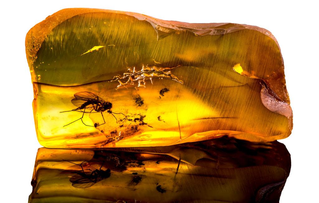 Bernstein mit Insekt Bernstein - Das fossile Harz