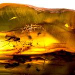 Bernstein mit Insekt